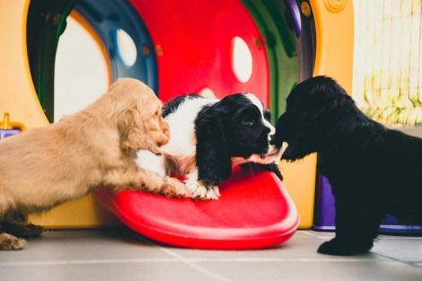 cuccioli--2
