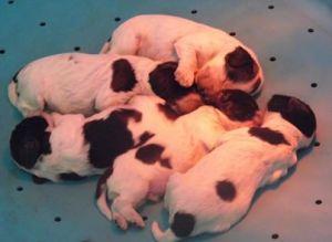 cuccioli Fendi1