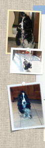 Forwardingdogs Porthos