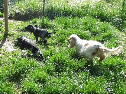 Paris e cuccioli