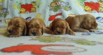 cuccioli 2 Lolita del 13.05.14
