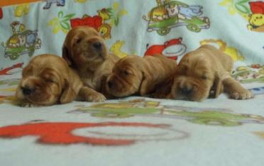 cuccioli 3 Lolita del 13.05.14