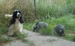 cucciolo Fendi e Blu giardino