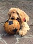 Forwardingdogs Oscar, Riccione