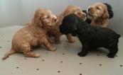 cuccioli di Lolita2