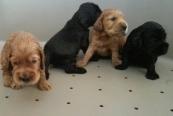 cuccioli di Lolita3