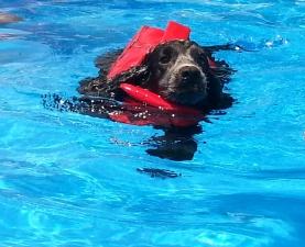 New inaugura la piscina