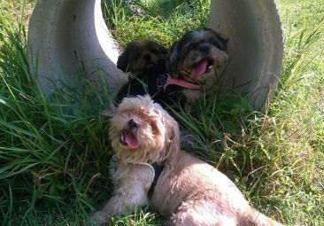 Pongo, Lilly e Minou in educazione 110715