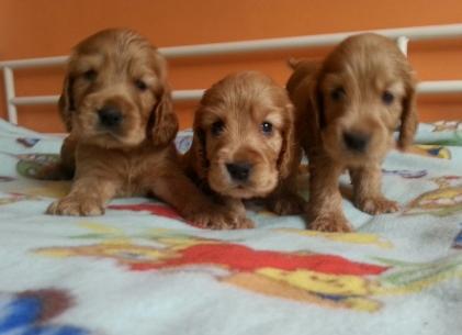 Cuccioli Lolita2