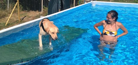 Milo in piscina3