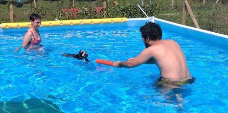 Forwardingdogs BILBO in piscina2