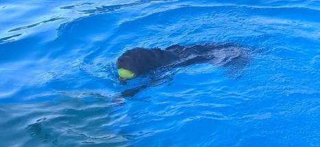 Tosca e Nisa insieme in piscina