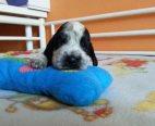 Cuccioli New2