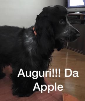 Forwardingdogs Apple